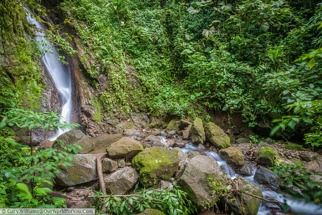 Within the Cloud Forest Reserve a small waterfall flows through the rocks., Monteverde, Costa Rica