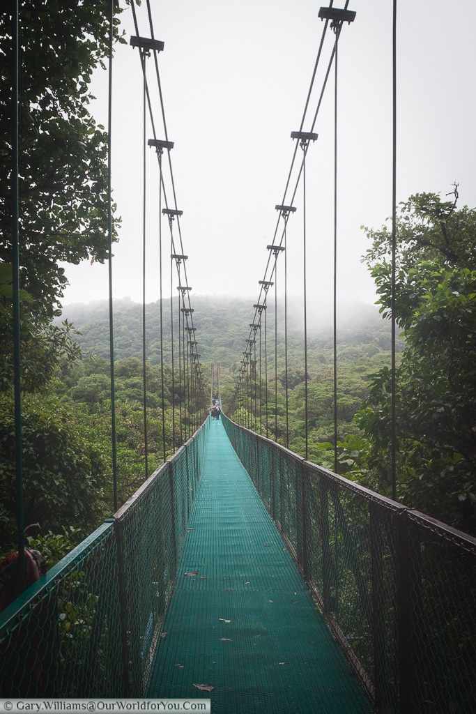Cable bridges connect different parts of the Cloud Forest Reserve, Monteverde, Costa Rica