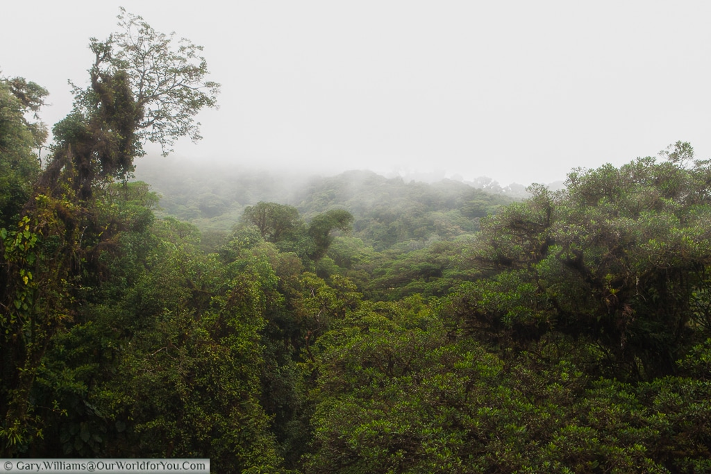 As expected, the clouds roll over the top of the Cloud Forest Reserve, Monteverde, Costa Rica