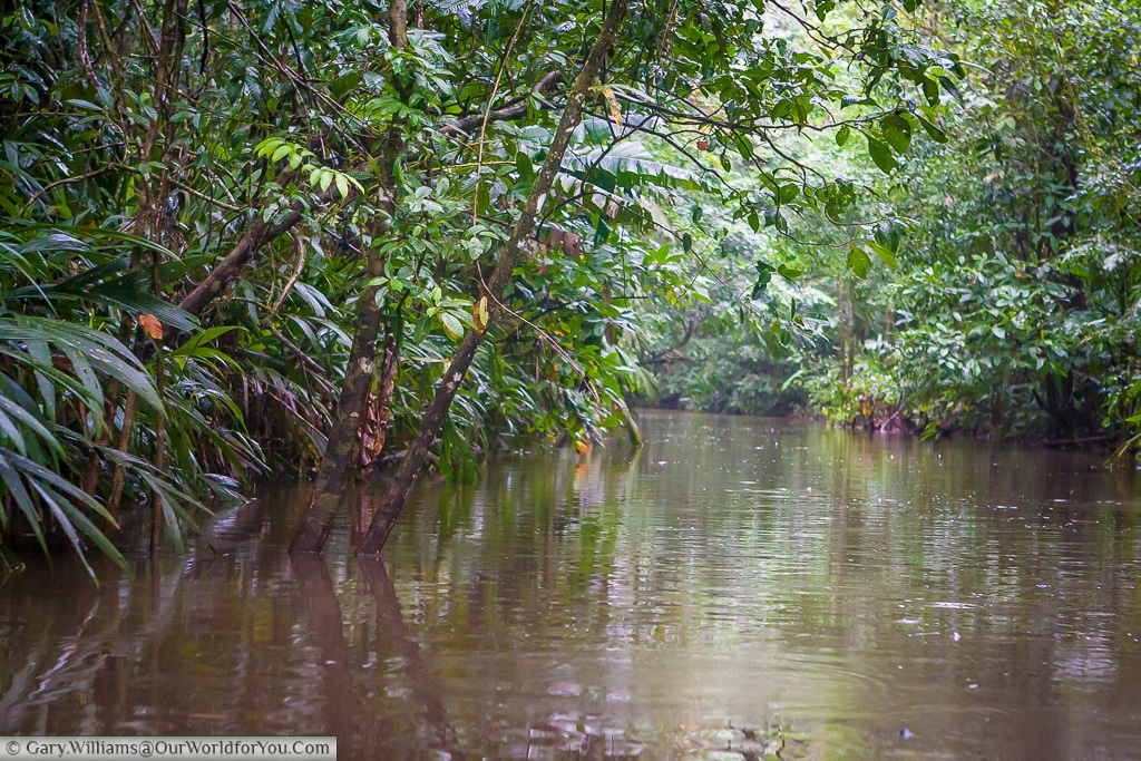 A view down one of the many tributaries that feed the lagoon at Tortuguero, Costa Rica