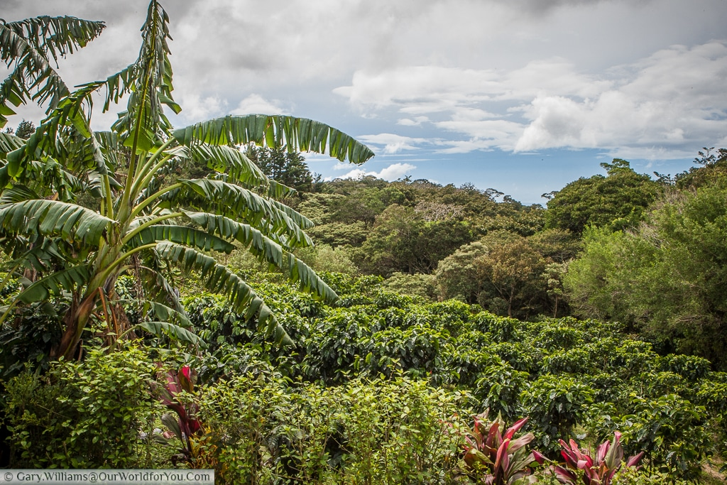 The view from the veranda, over the Don Juan coffee plantation, Monteverde, Costa Rica