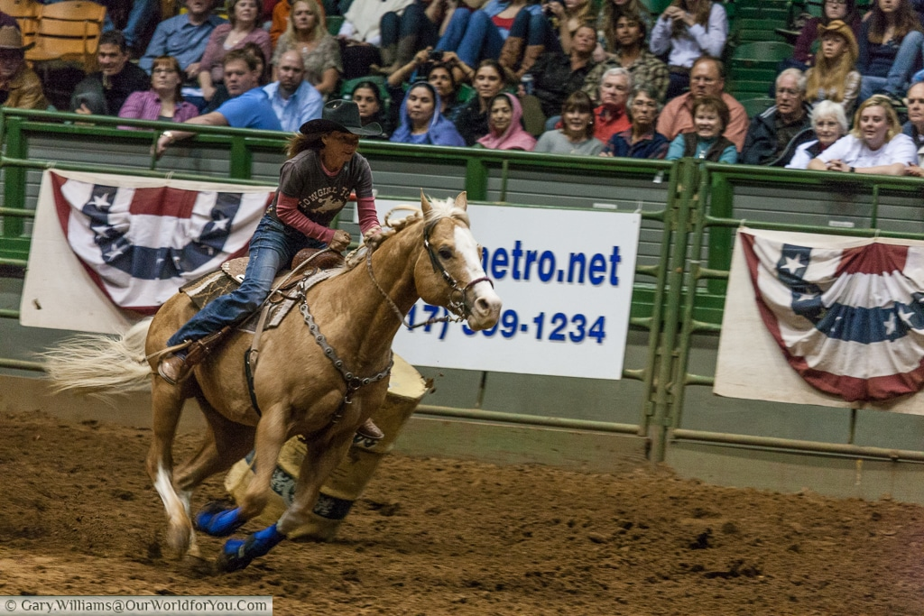 Barrel chase at the Stockyards Championship Rodeo, Fort Worth, Texas