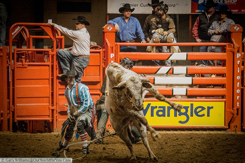 Bring the beast under control at the Stockyards Championship Rodeo, Fort Worth, Texas