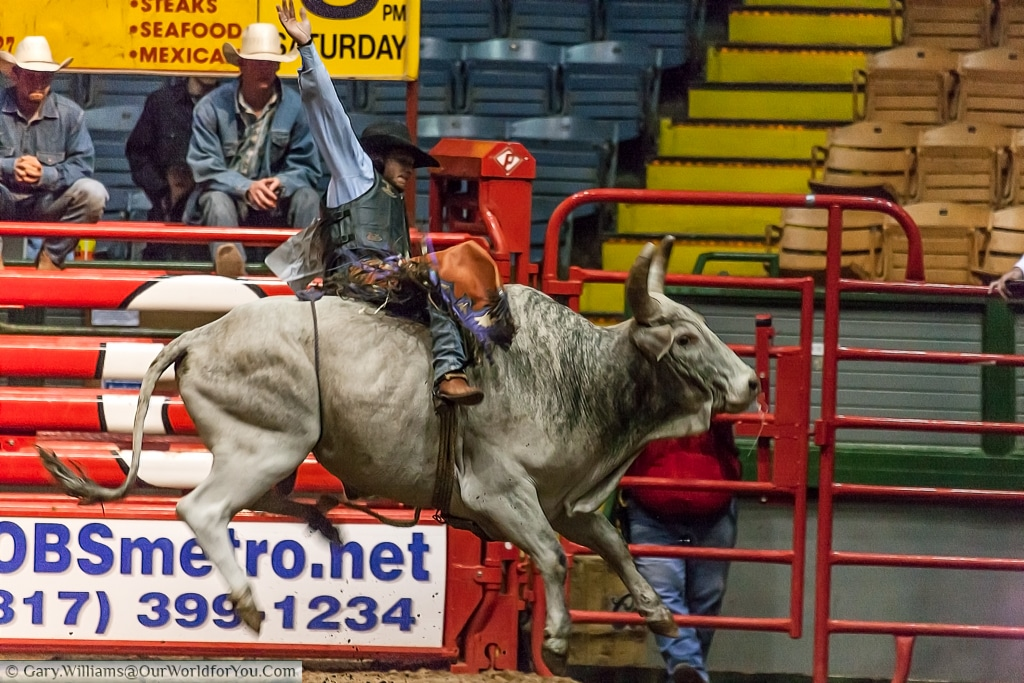 Mastering the bull at the Stockyards Championship Rodeo, Fort Worth, Texas