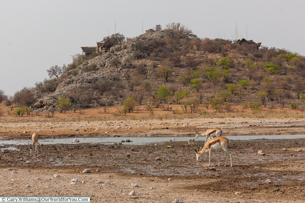 Dolomite camp & its watering hole, Etosha, Namibia