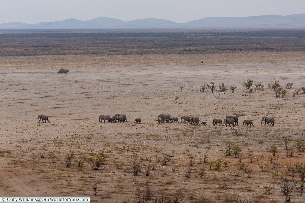 Elephants on the plain - moving on, Etosha National Park, Namibia