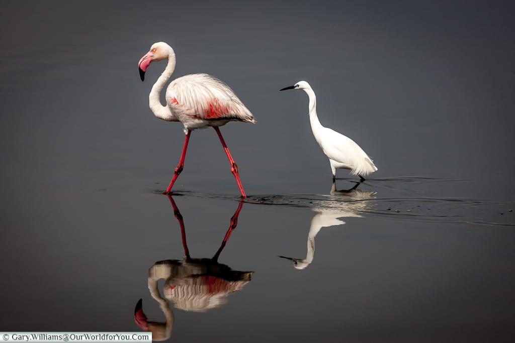 Feathered friends, Swakopmund, Namibia