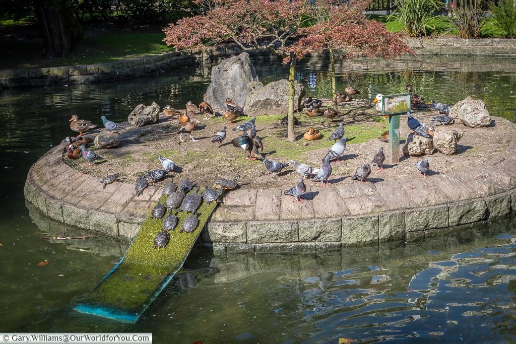 Turtles in the park, Oviedo, Spain