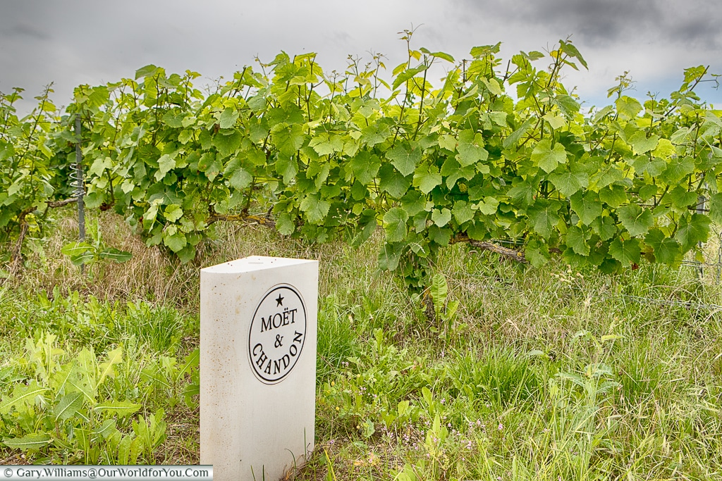 A Moët & Chandon parcels of vines, Champagne, France